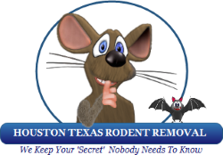 Houston Texas Rodent Removal | Contact | Phone | Online | Email